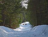 Deer  Sewall  Rd. DeMeritt Forest 3-8-15-ed.JPG