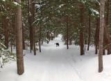 DeMeritt Forest d 3-17-15-ed.jpg