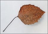 Leaf  DeMeritt Forest  3-23-17-ed.jpg
