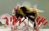 Bee - Bangor 8-12-12-ed .jpg