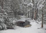 Kelley -  Blue Trail DeMeritt Forest  2-5-16-ed.JPG