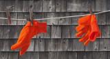 Gloves - Belfast  2-13-13-ed.jpg
