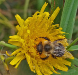 Bee City Forest 9-27-17.jpg
