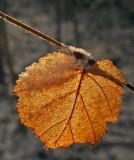 Leaf Hogback Connector Trail 12-16-15-ed.jpg