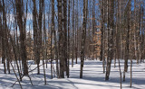 Woods  Side Trail Dover-Foxcroft b 2-17-17.jpg