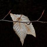 Leaves Little Long Pond  3-16-16-ed.JPG