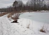 Kelley - Small Pond Newman Hill 4-1-18.jpg