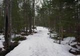 Trail -Newman Hill 4-1-18.jpg