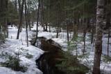 Stream DeMeritt Forest  4-8-18.jpg
