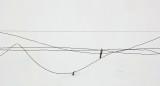Fence - Paul Bunyan Trails  b 3-21-15.jpg
