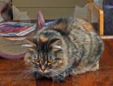 Cat in Window  - Bangor b 11-4-12-ed .jpg