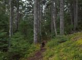 Kelley - Harbor Brook Trail 4-19-18.jpg