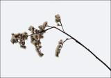 Weed Trail Along Kenduskeag 1-29-16-ed.jpg