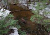 Kelley - DeMeritt Forest 4-21-18.jpg