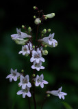 Tiny Flowers Garden 6-30-18.jpg