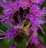 Bee Garden 7-28-18.jpg