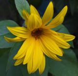 Flower Garden 9-7-18_.jpg