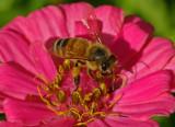 Bee Garden d 9-28-18.jpg