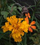 Flowers Garden 9-28-18.jpg