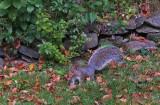 Squirrel Garden 9-28-18.jpg