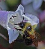 Bee Garden 6-27-18.jpg