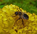 Bee Garden 9-28-18_.jpg