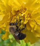 Bee Gaeden 10-17-18.jpg