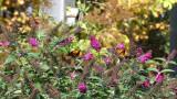 A butterfly friendly garden