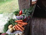 Organic produce in our back yard!