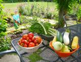 Bountiful organic produce grown in one's back yard!