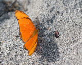 Butterfly on the Sand.jpg