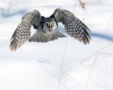 Flight Over Snow.jpg
