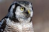 Owl Profile.jpg
