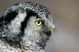 Owl Side View.jpg