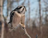 Owl Talon.jpg