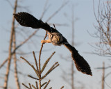 Owl Launch.jpg