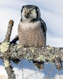Owl on Log.jpg