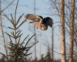 Super-Owl.jpg