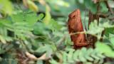 Reptile | Siem Reap
