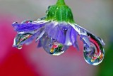 water drop reflection.jpg