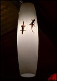 Geckos in a restaurant