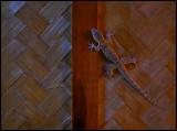 Gecko in a restaurant