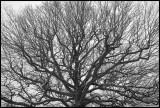 Arbour Vitae (Livets träd) - Arlanda