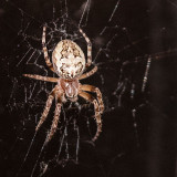 Spiders Photographed in NW Colorado