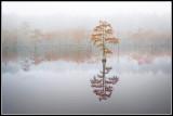 Bald Cypress Pond