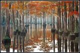 Fall Cypress Pond