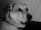 Aug 3 (Apprehensive Scooby)
