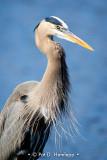 Heron profile
