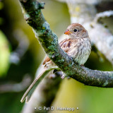 Relaxed sparrow