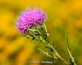 Purple snd yellow